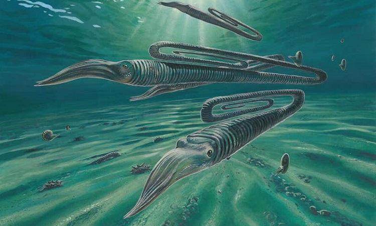 Phục dựng hình dáng của mực Diplomoceras maximum. Ảnh: James McKay.