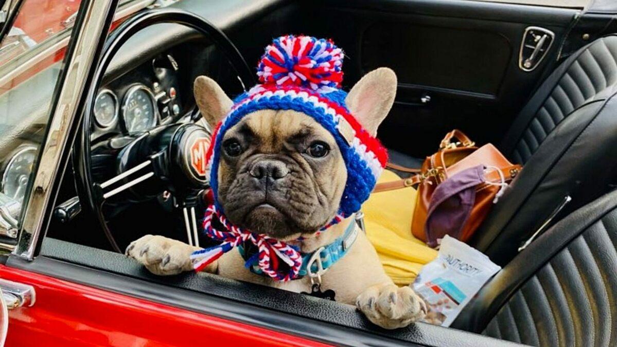 Chú chó Wilbur Beast đắc cử thị trưởng thị trấn Rabbit Hash, bang Kentucky. Ảnh: Fox News/ Amy Noland.