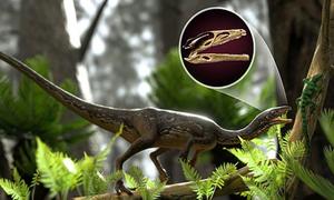 Tái tạo bộ não hoàn chỉnh đầu tiên của khủng long