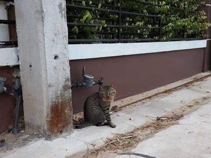 Sau đó, chủ nhân con mèo đã phải đến gặp dì May để trả nợ và cám ơn.