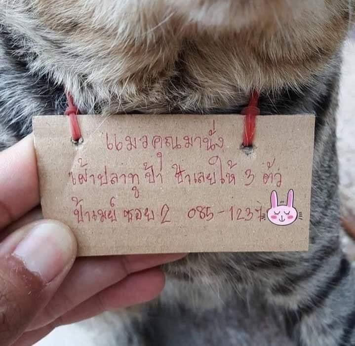 Tấm bảng ghi Con mèo của bạn cứ nhìn chằm chằm vào những con cá nục ở cửa hàng tôi, vì vậy tôi đã cho nó 3 con. Ký tên: Dì May ở hẻm số 2, kèm số điện thoại.