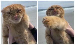 Mèo nổi đóa khi được đi biển lần đầu