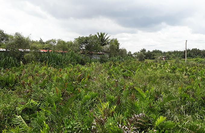 Một phần khu đất 158 ha thuộc dự án Khu nhà ở của Công ty cổ phần Sài Gòn Gôn tại phường Long Trường, quận 9. Ảnh: Trung Sơn.