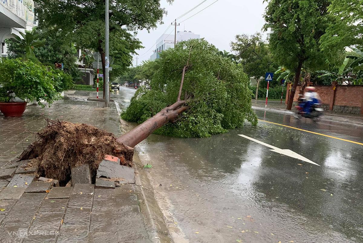 Cây xanh ngã trên đường Thích Quảng Đức, phước Long, TP Nha Trang, sáng 10/11. Ảnh: Xuân Ngọc.