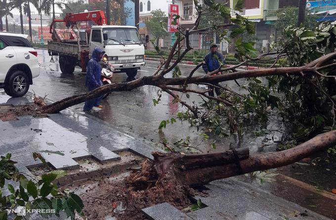 Cây ngã trên đường Hùng vương, TP Tuy Hòa, Phú Yên sáng 10.11. Ảnh:Hữu Thế.
