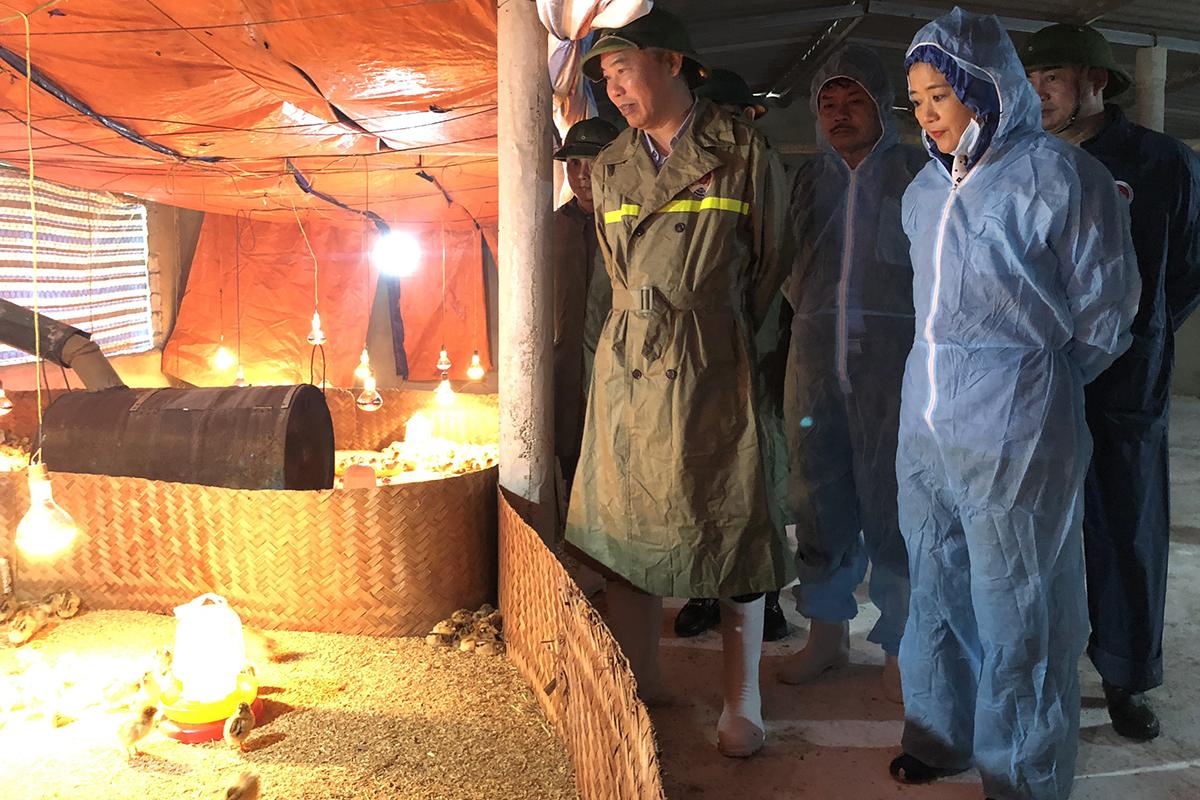 Đoàn công tác Bộ Nông nghiệp và Phát triển nông thôn thăm một điểm nuôi gà sau lũ lụt. Ảnh: Quang Hà