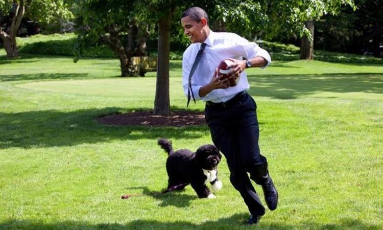 Tổng thống Barack Obama chơi bóng cùng cún cưng trên bãi cỏ phía nam Nhà Trắng hồi năm 2009. Ảnh: Reuters.