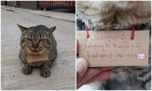 Mèo trở về với món nợ sau ba ngày đi bụi
