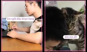 Mèo cưng gây chú ý khi chủ học bài