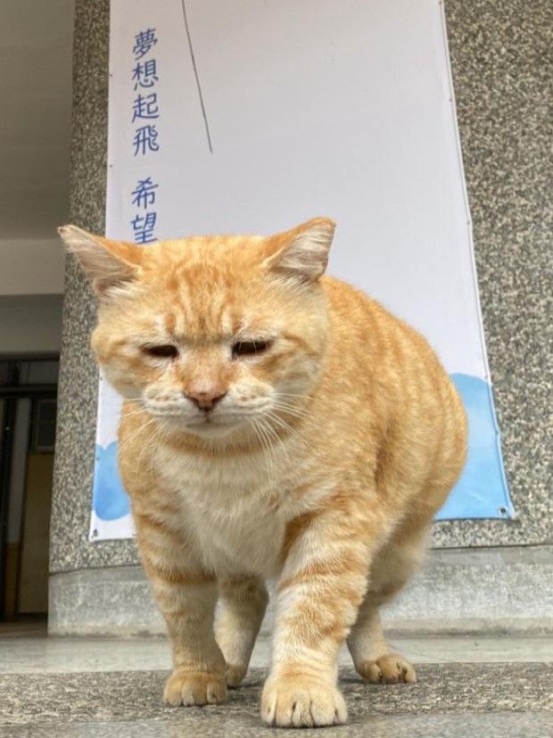 Mèo được trường bổ nhiệm chức Hiệu phó - 2