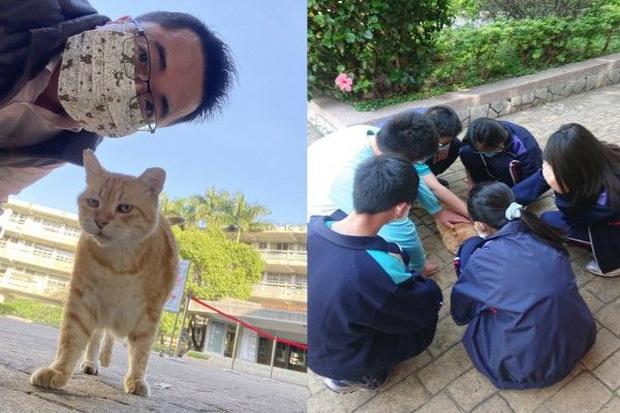 Mèo vàng còn có luôn phòng VIP để nghỉ ngơi tại trường và chẳng phải làm gì nhiều.