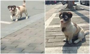 Cún cưng vừa ra đời đã mang danh đạo tặc
