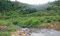 Vỡ mộng bỏ phố về quê vì dòng suối đầy thuốc trừ sâu