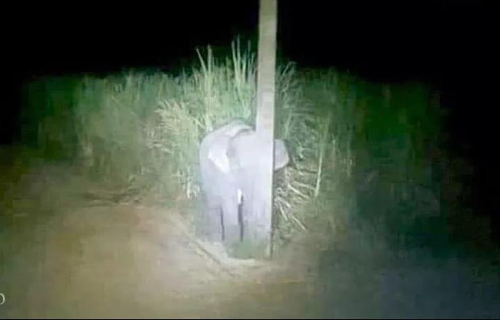 Mọi người ơi, có ai nhìn thấy con voi ở đâu không?