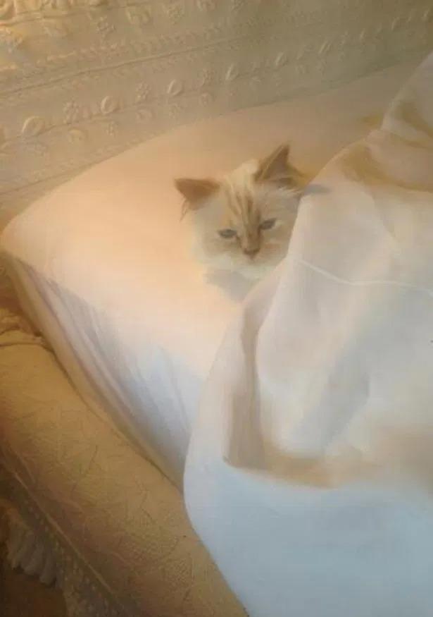 Choupette được ngủ trên giường riêng, có chăn ấm nệm êm.