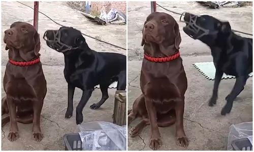 Chó nhỏ tìm viện binh khi bị mèo bắt nạt - 2