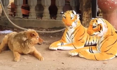 Chó nhỏ tìm viện binh khi bị mèo bắt nạt - 1