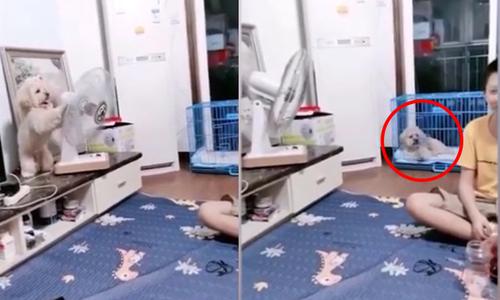 Chó cưng nổi đóa vì bị chủ phá khi chơi game - 2