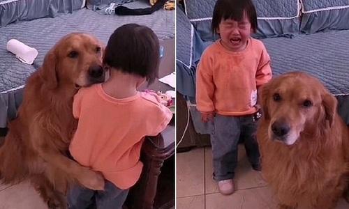 Chó cưng nổi đóa vì bị chủ phá khi chơi game - 3