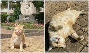 Mèo được trường bổ nhiệm chức Hiệu phó
