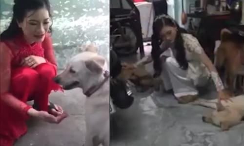 Chó cưng hớn hở trong ngày cô chủ kết hôn - 12