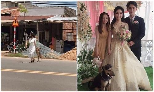 Chó cưng hớn hở trong ngày cô chủ kết hôn - 11