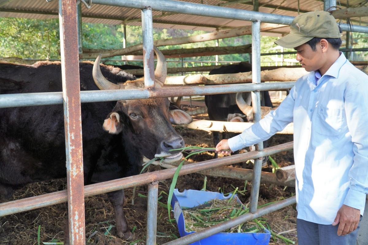 Con đực lớn suy kiệt nhất nay đã tỉnh táo, nở da nở thịt sau khi được cung cấp đủ thức ăn. Ảnh: Việt Quốc.