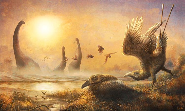 Falcatakely forsterae sống cùng thời khủng long. Ảnh: Reuters.