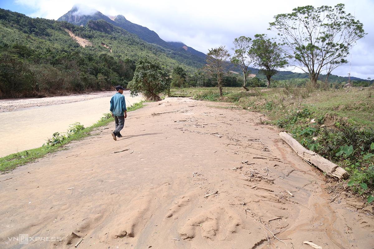 Một nông dân Quảng Trị đi trên mảnh ruộng bị bồi lấp cát khoảng 0,7m sau mưa lũ. Ảnh: Hoàng Táo