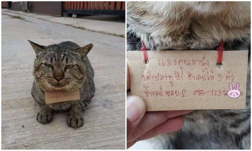 Bé gái khóc năn nỉ mẹ giữ lại mèo hư - 3