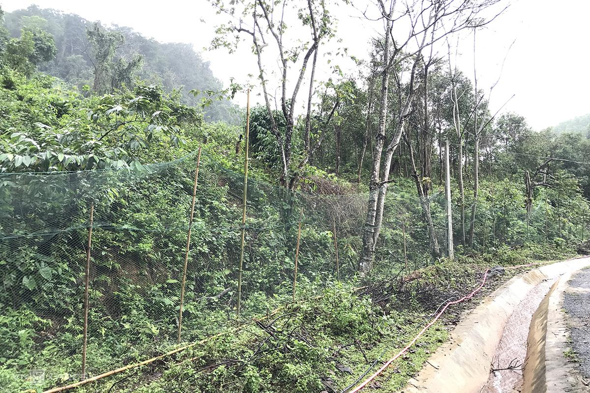 Đoạn lưới cao từ 2-3m để ngăn đàn voọc ra đường cắn người. Ảnh: Hoàng Táo
