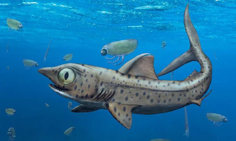 Mô phỏng loài cá mập tiền sử Ferromirum oukherbouchi. Ảnh: Christian Klug.