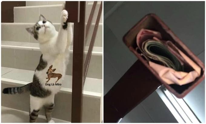 Mèo chỉ cô chủ nơi chồng cất quỹ đen