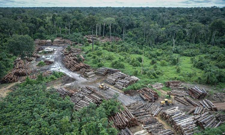 Một cánh rừng bị chặt phá trái phép ở lưu vực Amazon. Ảnh: AP.