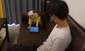 Chó cưng nổi đóa vì bị chủ phá khi chơi game