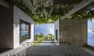 Những bồn cây khổng lồ trong ngôi nhà 250 m2