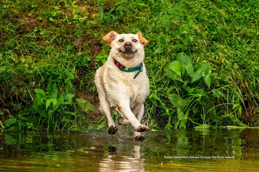 Look Mom - I Can Walk On Water (Mẹ ơi, con đi được trên nước nè) của John Carelli.