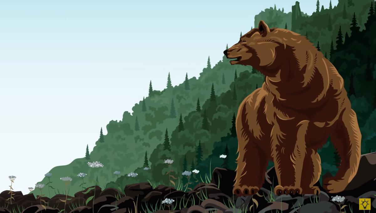 Kiểm tra kỹ năng sinh tồn khi gặp động vật hoang dã - 2