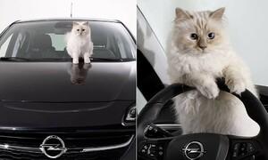 Cuộc sống sang chảnh của mèo giàu nhất thế giới