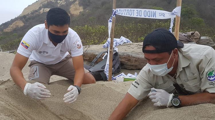 Các nhà bảo tồn lắp đặt nhiệt kế tại tổ trứng rùa da mới được phát hiện. Ảnh: Blend.