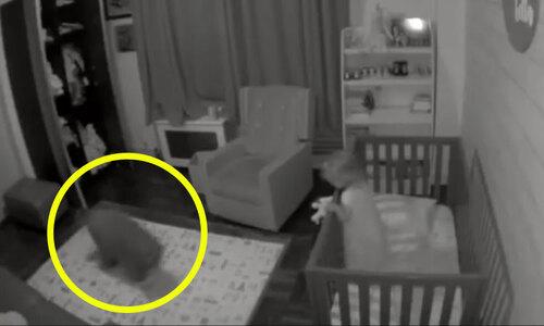 Camera ghi cảnh chuột trộm thức ăn của cún - 3