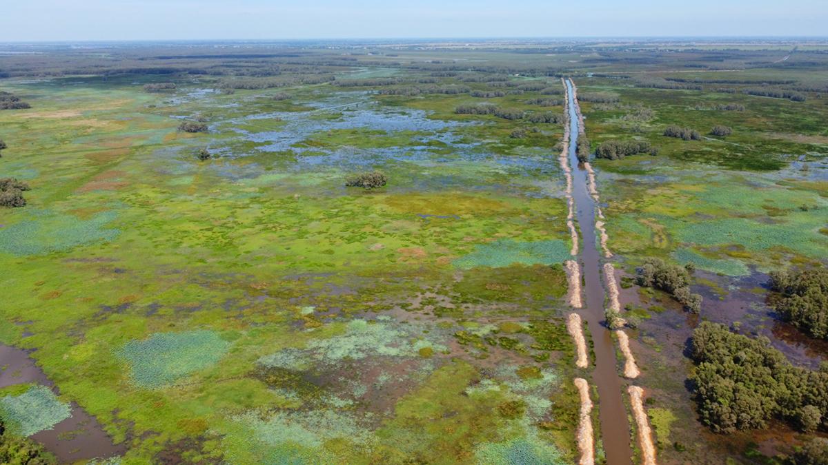 Một góc tiểu khu A1, vườn quốc gia Tràm Chim, nơi có cánh đồng lúa ma 500 ha. Ảnh: Hoàng Nam