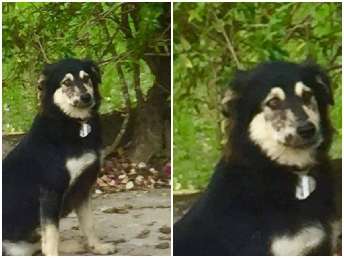 Chú chó mà chủ nhà cảnh báo rằng nó rất hung dữ...