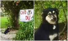 Chủ nhà cảnh báo có chó dữ nhưng không ai sợ