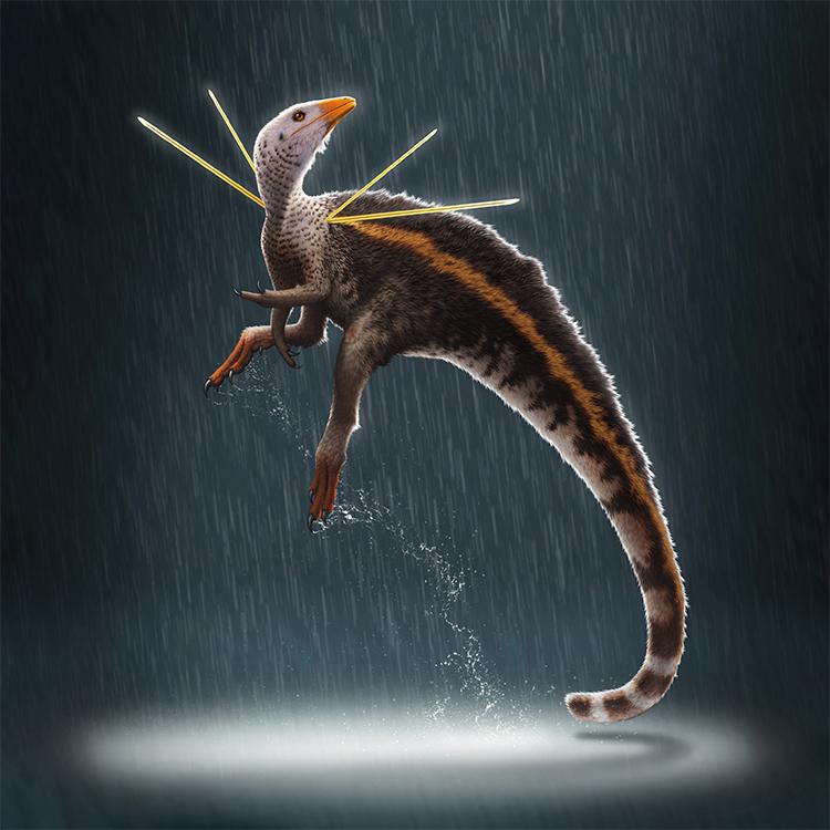 Mô phỏng loài khủng long Ubirajara joongatus. Ảnh: Bob Nicholls.