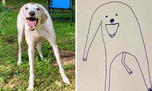 Cún ngáo giật giải quán quân trong cuộc thi vẽ chó