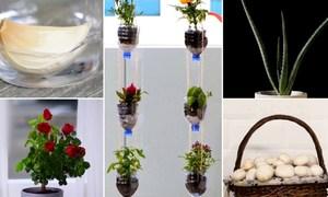 5 mẹo trồng cây trong nhà