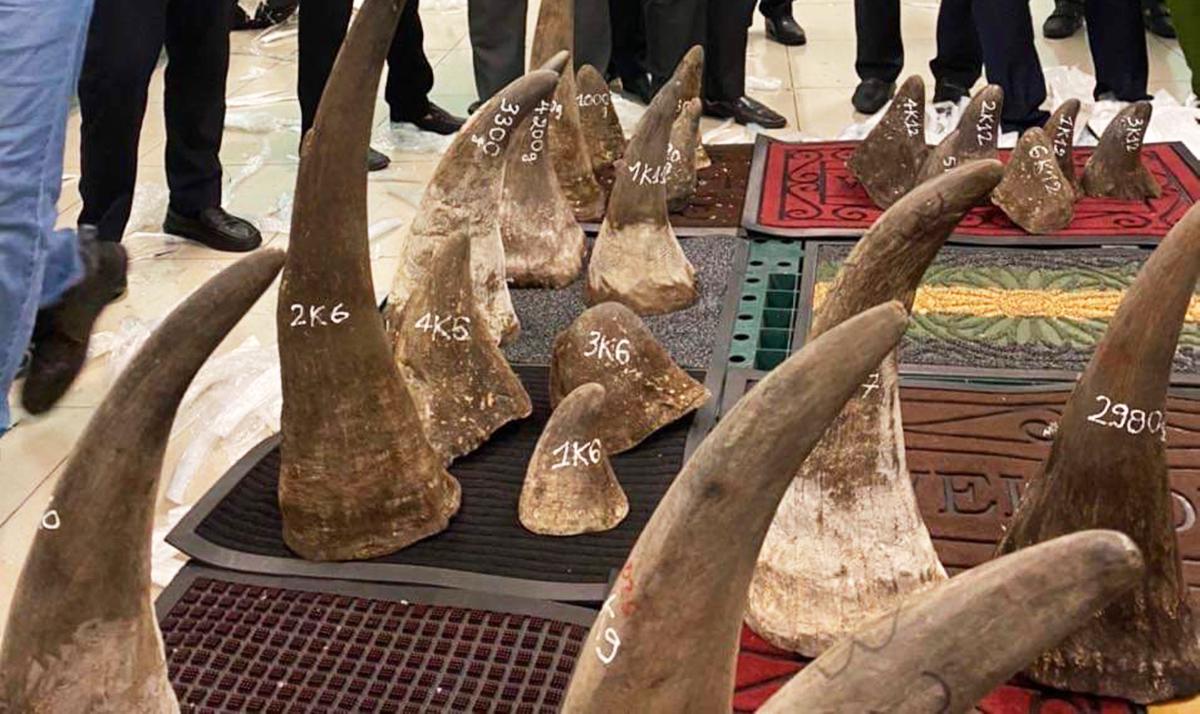 Số tang vật nghi sừng tê giác Châu Phi. Ảnh: Công an cung cấp.