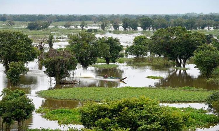 Một vùng đất ngập nước quanh hồ Tonle Sap. Ảnh: AFP.