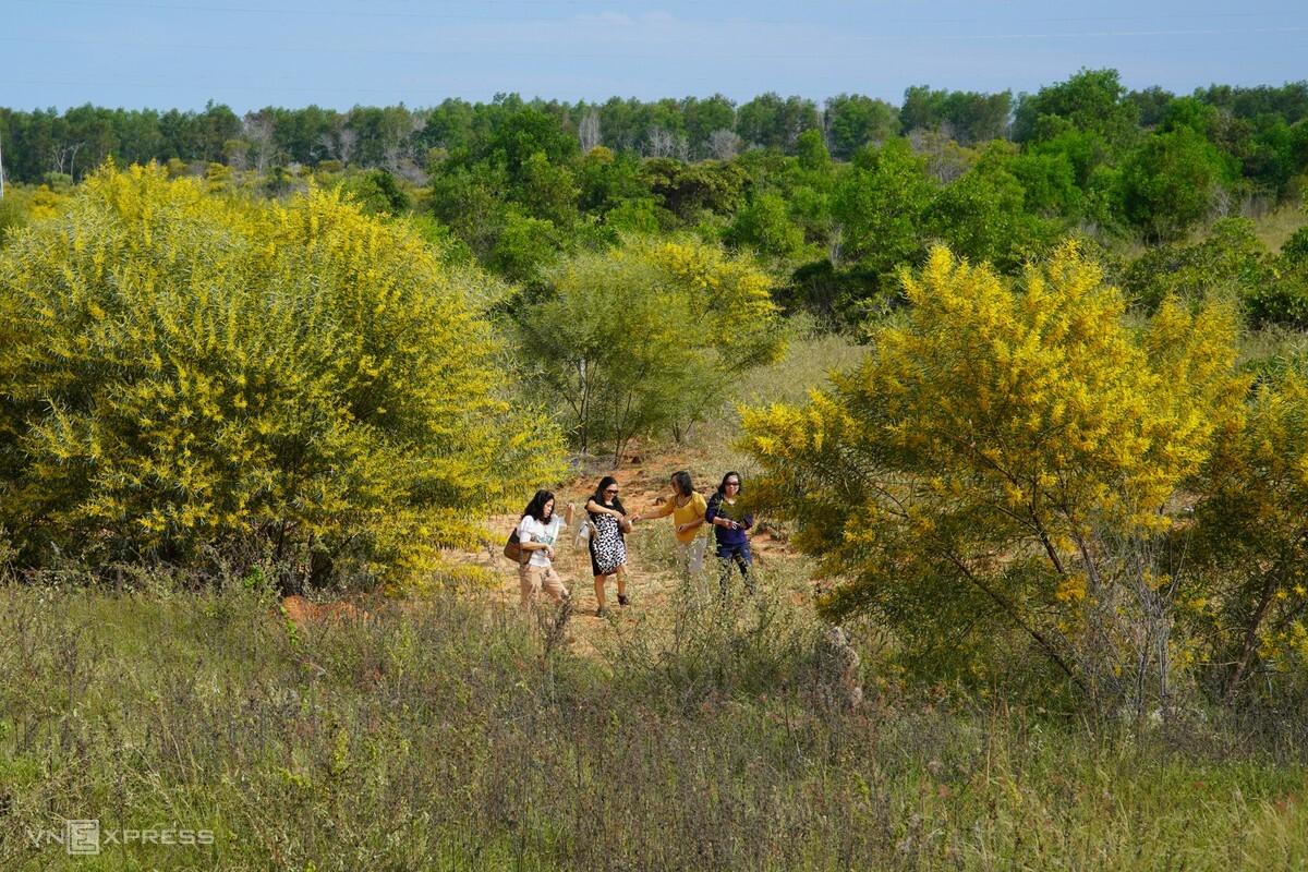 Chị Thu Ba (thứ hai từ trái qua) cùng nhóm bạn đi chơi ở rừng keo lá tràm, ngày 19/12. Ảnh: Việt Quốc.